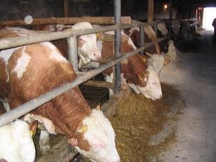 Zeolit – primena u stočarstvu